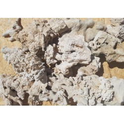 Sucha skała