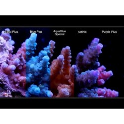 ATI Coral Plus T5 - 54W
