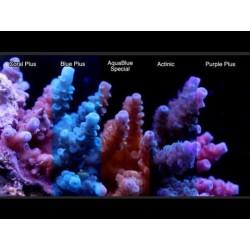 ATI Coral Plus T5 - 80W